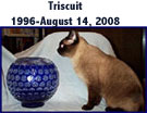 Triscuit (cat with glass